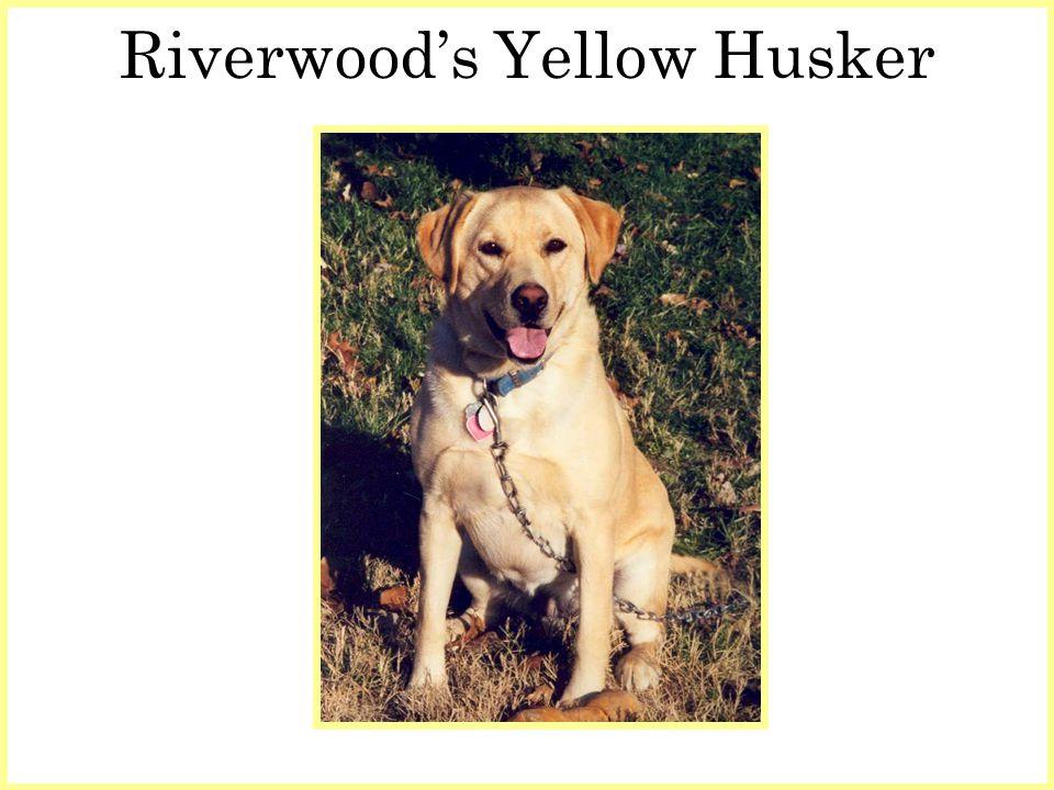 Riverwoods Yellow Husker