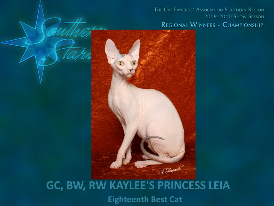 Eighteenth Best Cat GC, BW, RW KAYLEE'S PRINCESS LEIA