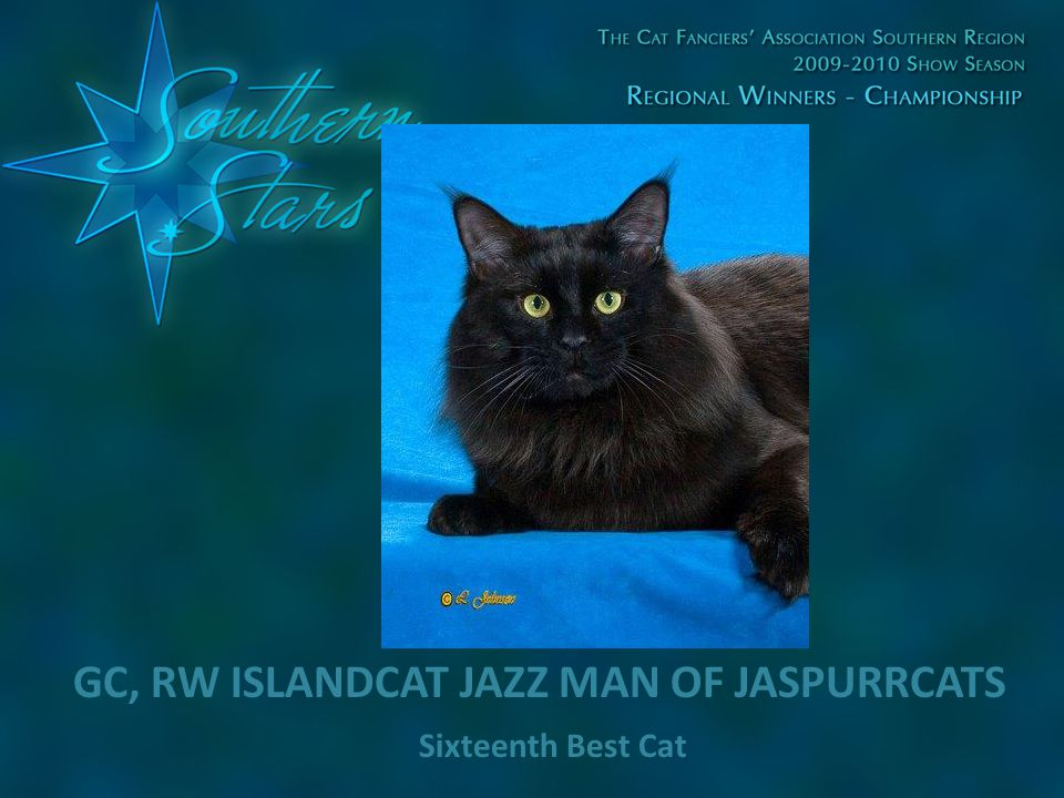 Sixteenth Best Cat GC, RW ISLANDCAT JAZZ MAN OF JASPURRCATS