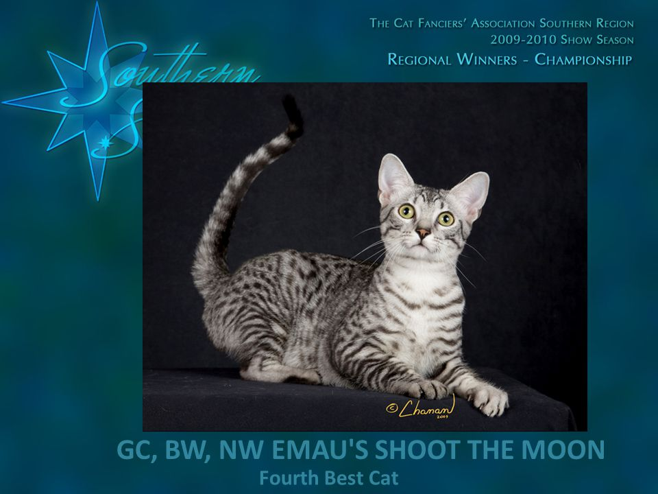 Fourth Best Cat GC, BW, NW EMAU'S SHOOT THE MOON