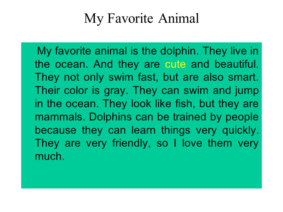 My favourite pet essay