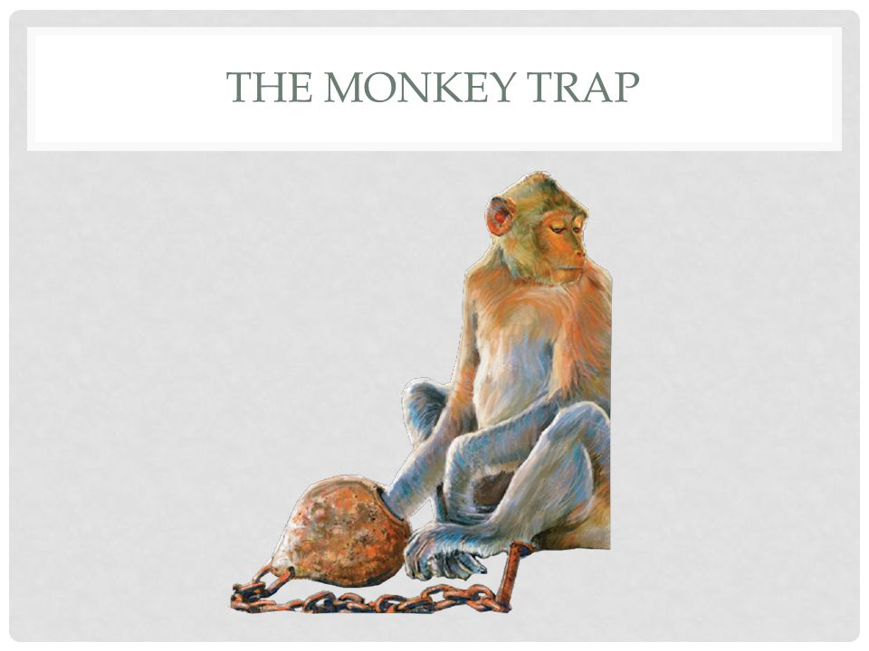 THE MONKEY TRAP