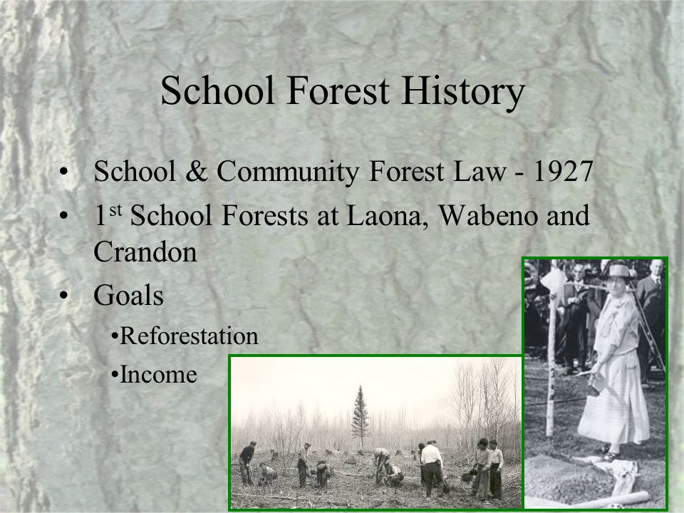 School Forest History School & Community Forest Law - 1927 1 st School Forests at Laona, Wabeno and Crandon Goals Reforestation Income