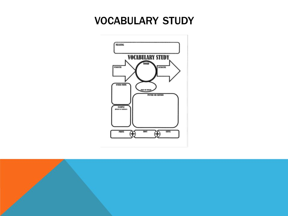 VOCABULARY STUDY