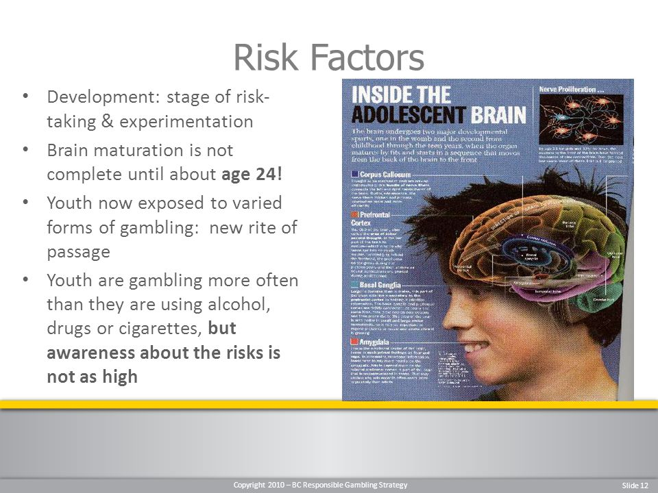 Copyright 2010 – BC Responsible Gambling Strategy Slide 12 Development: stage of risk- taking & experimentation Brain maturation is not complete until about age 24.