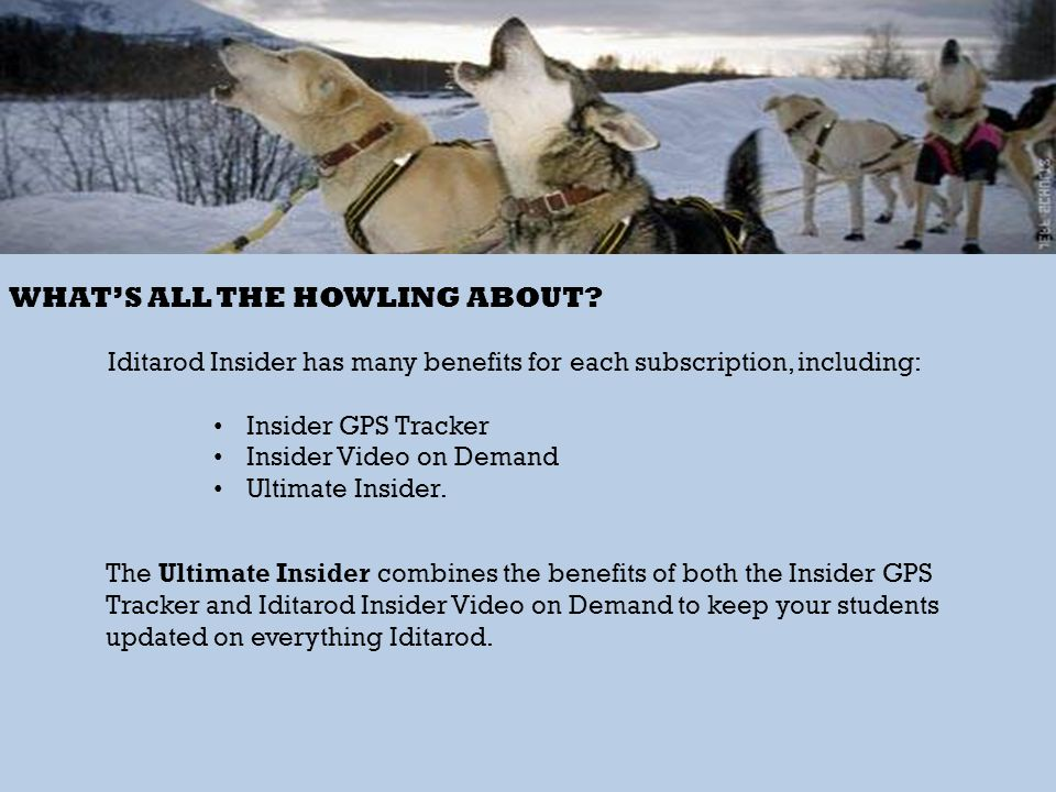 WHATS ALL THE HOWLING ABOUT? Iditarod Insider has many benefits for each subscription, including: Insider GPS Tracker Insider Video on Demand Ultimate