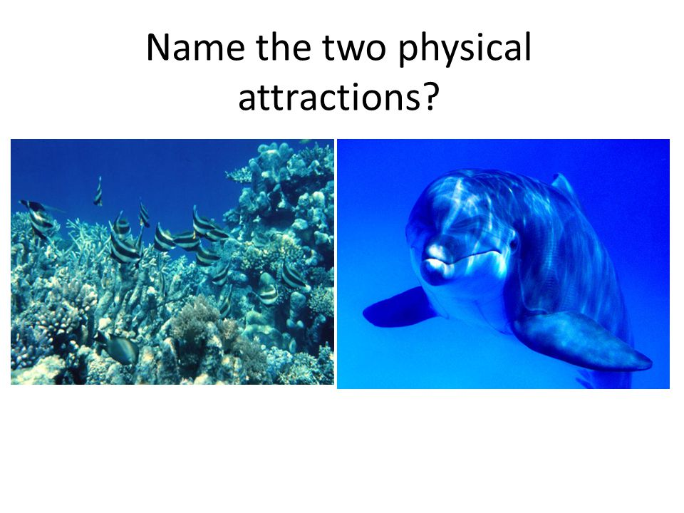 Name the two physical attractions?