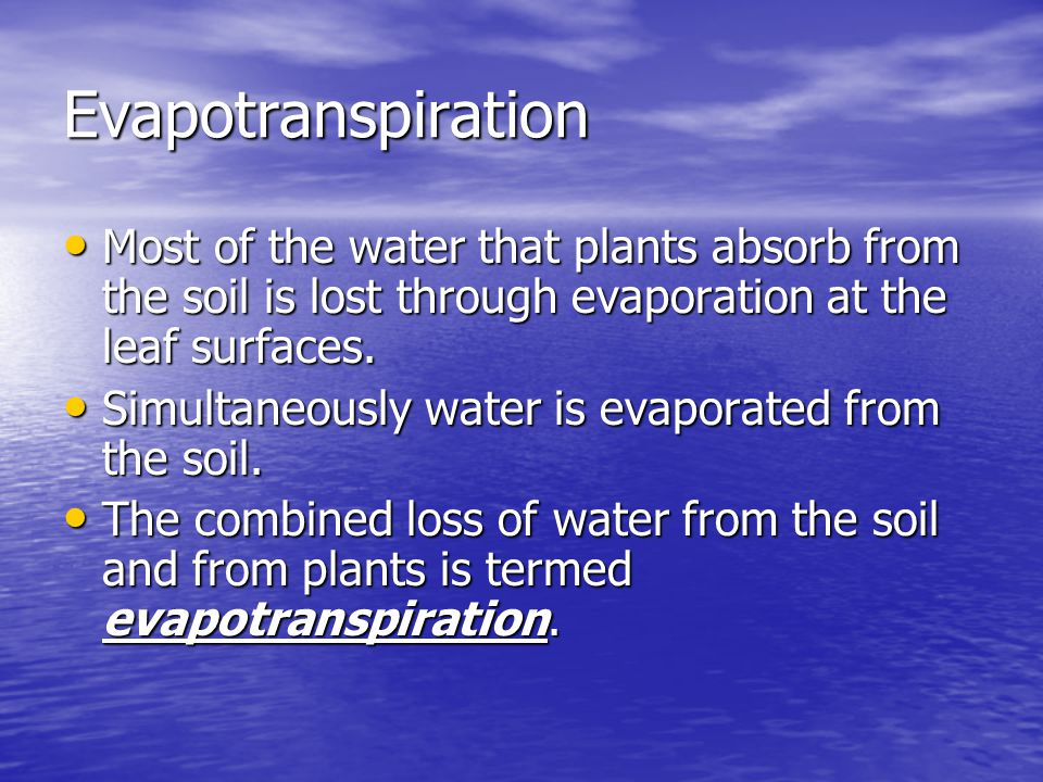 Evapotranspiration Most of the water that plants absorb from the soil is lost through evaporation at the leaf surfaces. Most of the water that plants