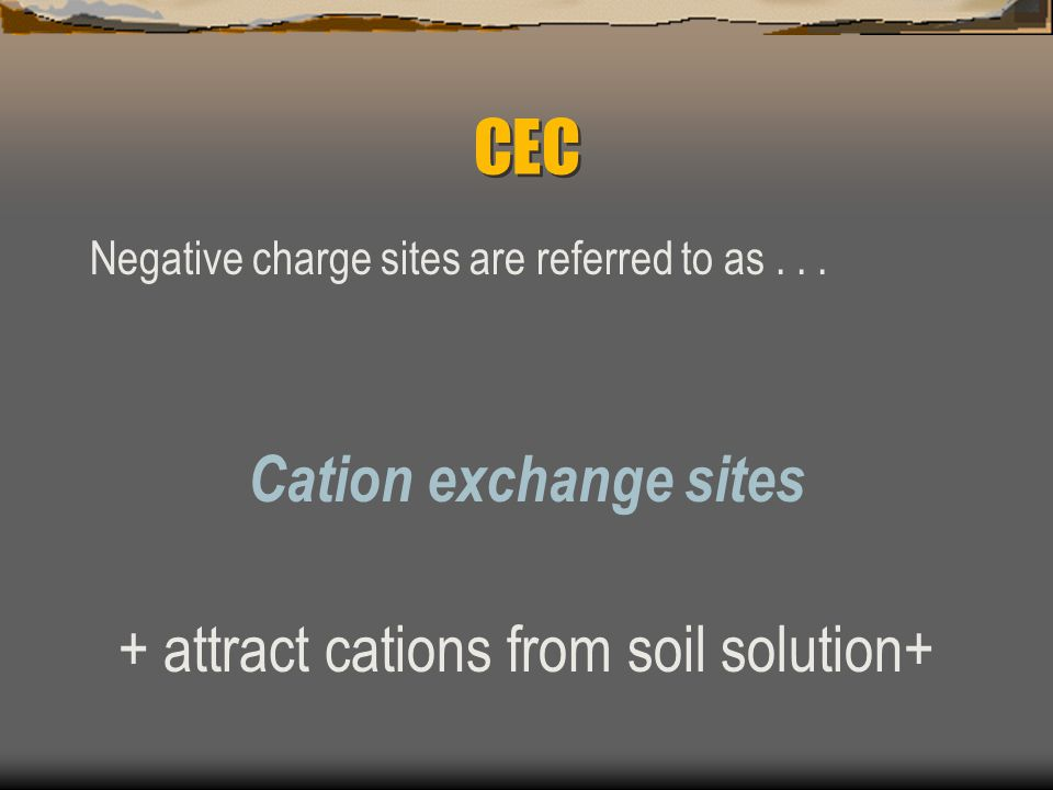 Cation Exchange Capacity (CEC) Clay Particles and Humus -affect chemical properties of soil -complex structures with many negative charge sites -negative charge sites attract positive ions called cations