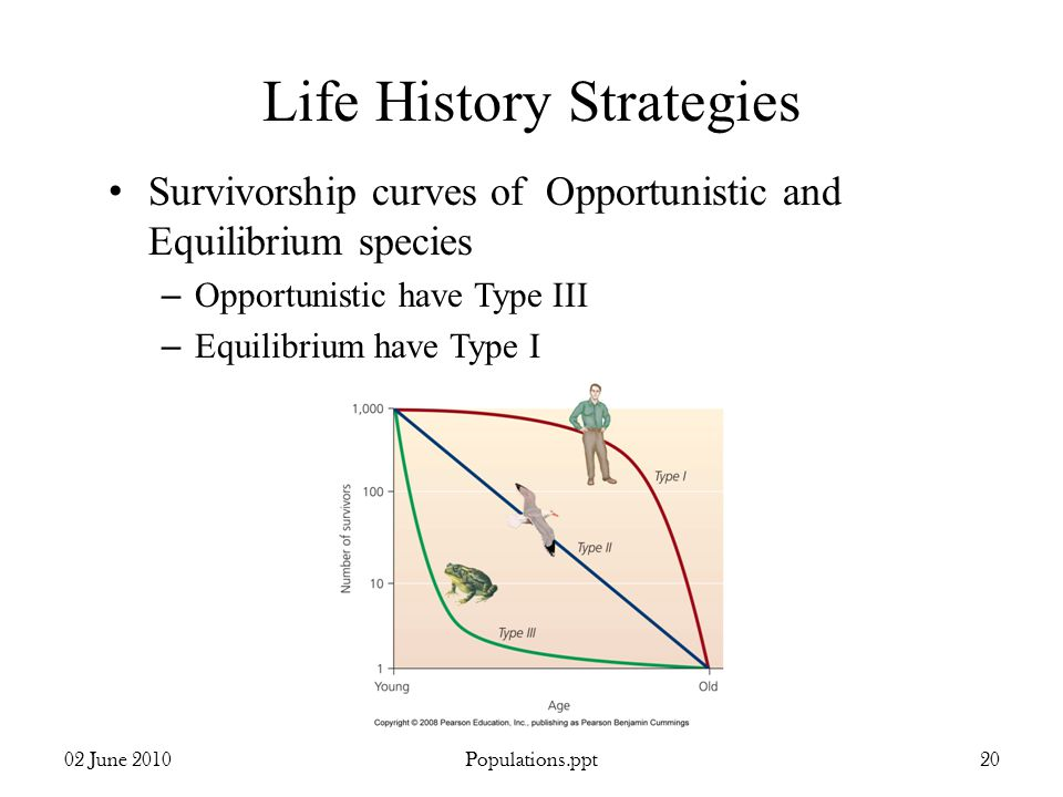 Life History Strategies Survivorship curves of Opportunistic and Equilibrium species – Opportunistic have Type III – Equilibrium have Type I 02 June 2