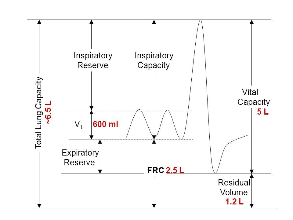 Expiratory Reserve Residual Volume Vital Capacity VTVT Total Lung Capacity Inspiratory Reserve FRC Inspiratory Capacity 600 ml 2.5 L 1.2 L 5 L ~6.5 L
