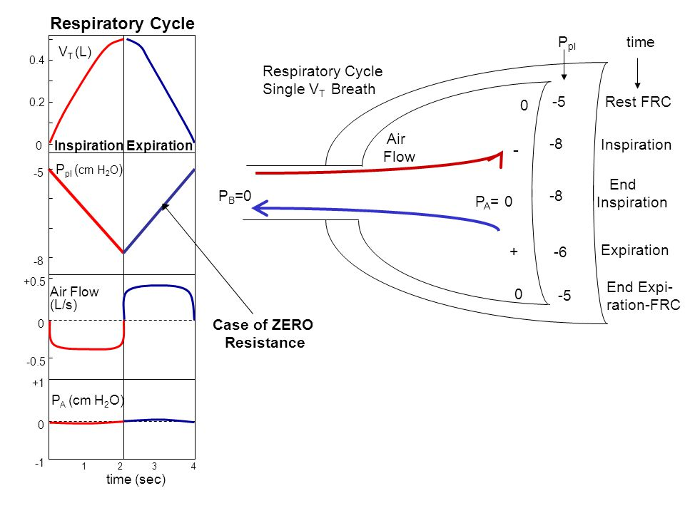 P A (cm H 2 O) +1 0 +0.5 -0.5 0 Air Flow (L/s) 1 2 3 4 time (sec) -5 -8 P pl ( cm H 2 O ) Case of ZERO Resistance V T (L) 0.4 0 0.2 Respiratory Cycle