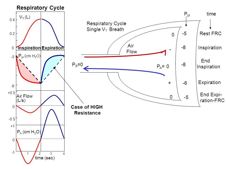 P A (cm H 2 O) +1 0 +0.5 -0.5 0 Air Flow (L/s) 1 2 3 4 time (sec) -5 -8 P pl ( cm H 2 O ) V T (L) 0.4 0 0.2 Respiratory Cycle InspirationExpiration -5
