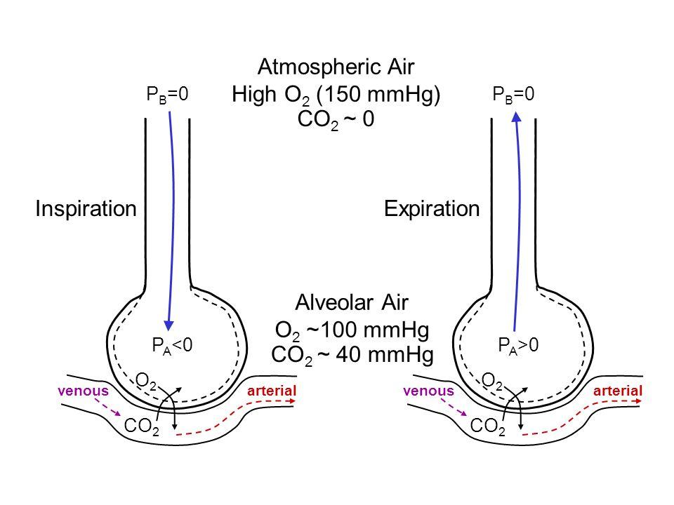O2O2 CO 2 venousarterial P B =0 P A <0 O2O2 CO 2 venousarterial P B =0 P A >0 Atmospheric Air High O 2 (150 mmHg) CO 2 ~ 0 Alveolar Air O 2 ~100 mmHg