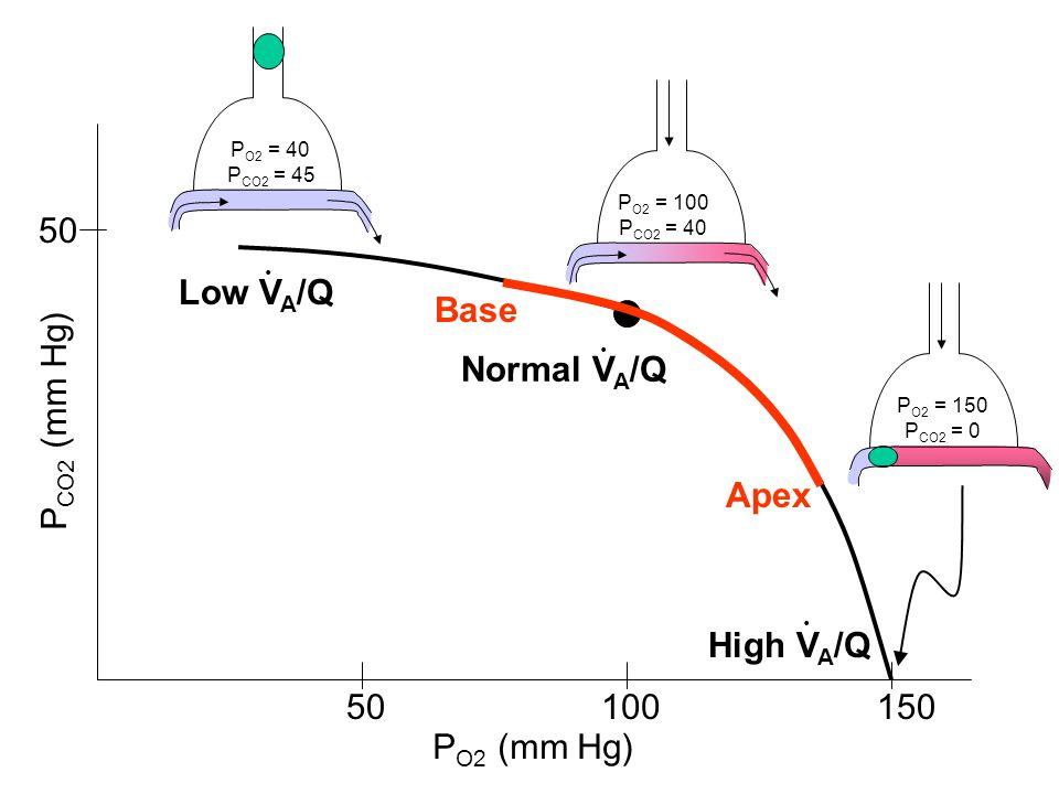 P O2 = 40 P CO2 = 45 Low V A /Q. Normal V A /Q. P O2 = 100 P CO2 = 40 High V A /Q. P O2 = 150 P CO2 = 0 P O2 (mm Hg) P CO2 (mm Hg) 50100150 50 Base Ap