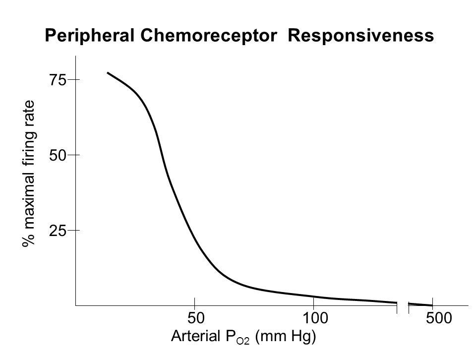 Arterial P O2 (mm Hg) % maximal firing rate 50100500 50 75 25 Peripheral Chemoreceptor Responsiveness
