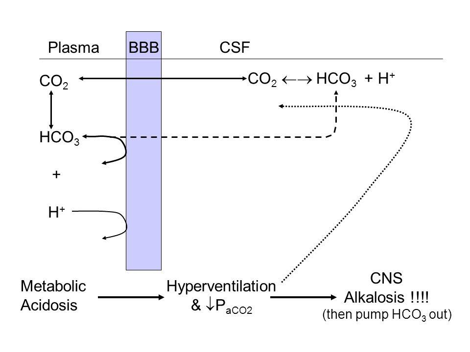 BBB CSFPlasma CO 2 HCO 3 + H + CO 2 HCO 3 + H + Metabolic Acidosis Hyperventilation & P aCO2 CNS Alkalosis !!!! (then pump HCO 3 out)