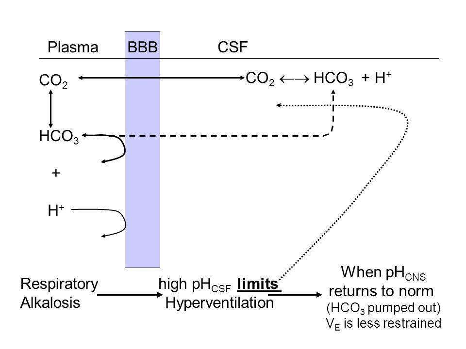 BBB CSFPlasma CO 2 HCO 3 + H + CO 2 HCO 3 + H + Respiratory Alkalosis high pH CSF limits Hyperventilation When pH CNS returns to norm (HCO 3 pumped ou