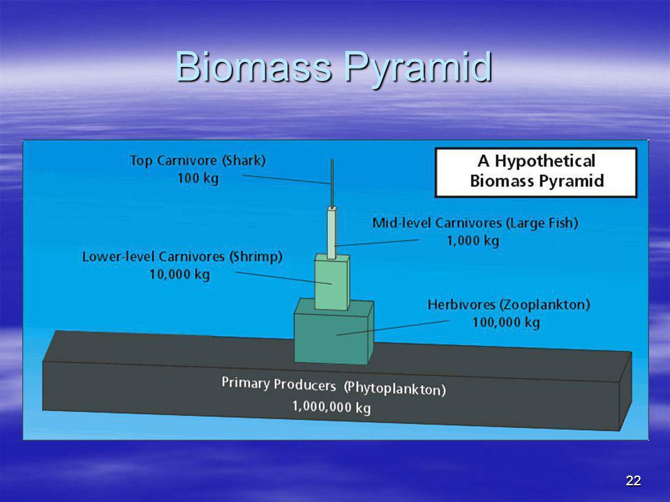 22 Biomass Pyramid