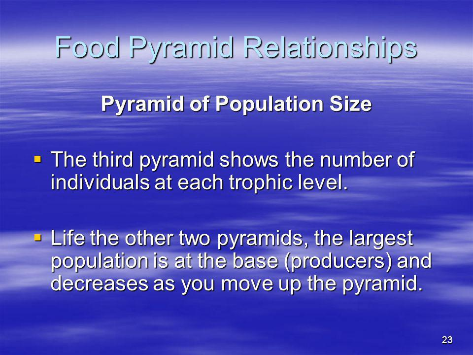 23 Food Pyramid Relationships Pyramid of Population Size The third pyramid shows the number of individuals at each trophic level. The third pyramid sh