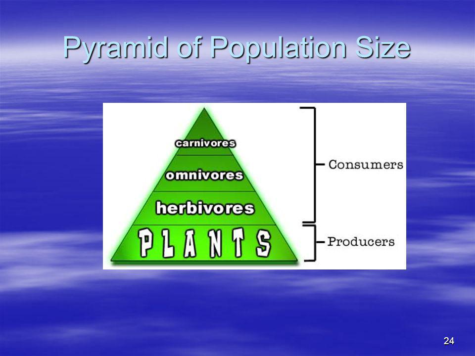 24 Pyramid of Population Size