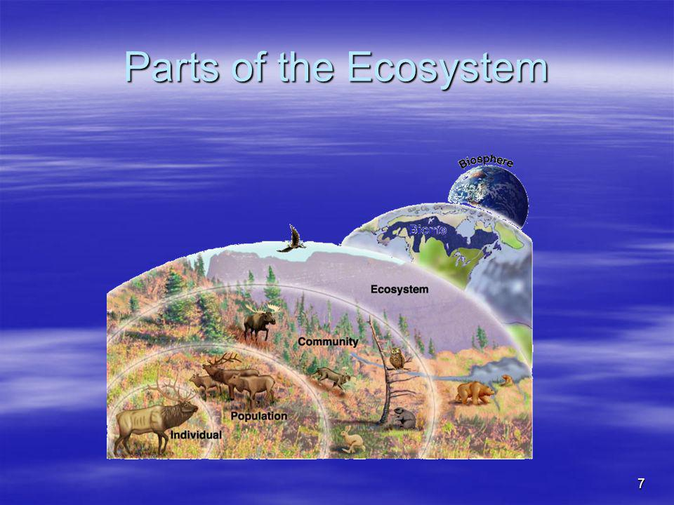 7 Parts of the Ecosystem