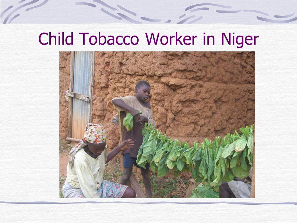Child Tobacco Worker in Niger