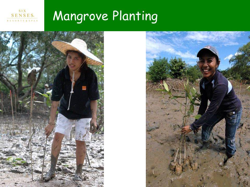 Mangrove Planting