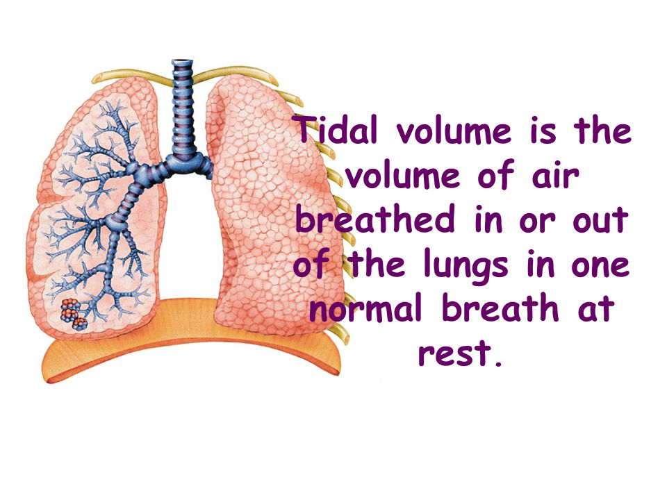 Spirometer Is a high-tech piece of equipment used to measure vital capacity, tidal volume, breathing rate and oxygen uptake.