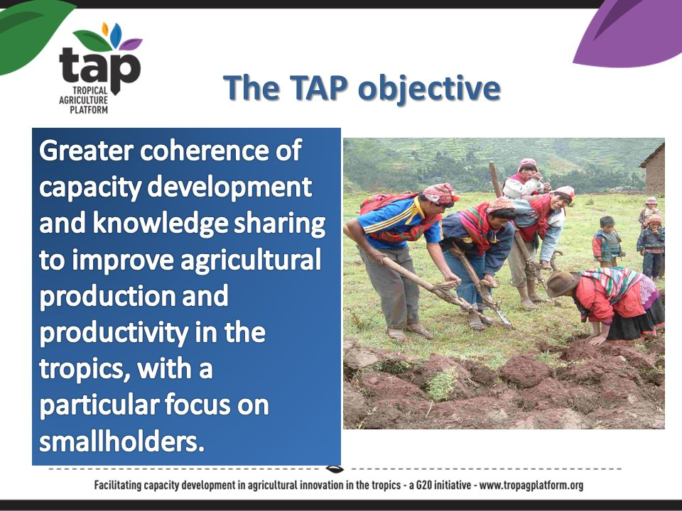 The TAP Approach Multilateral, multi-sectoral facilitation mechanism Convening stakeholders at global and national level Enabling actors to contribute through partnerships Creating more coherent actions with greater impact Aligning with national, regional and global policy frameworks FAO acting as a global facilitator and convenor