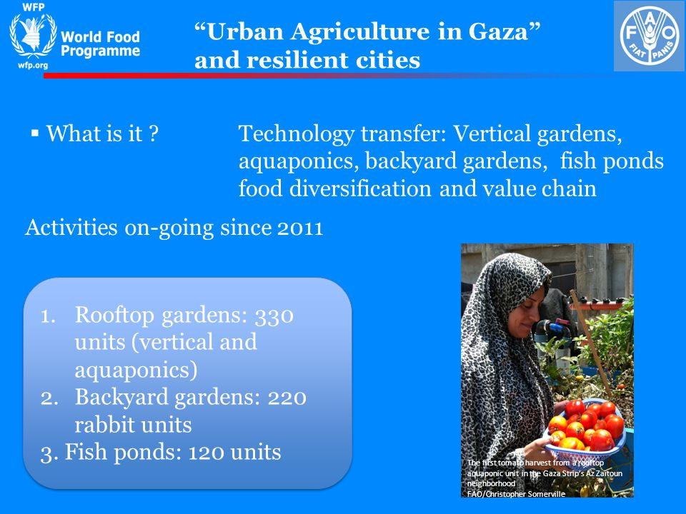 Urban Agriculture in Gaza and resilient cities Activities on-going since 2011 What is it ?Technology transfer: Vertical gardens, aquaponics, backyard