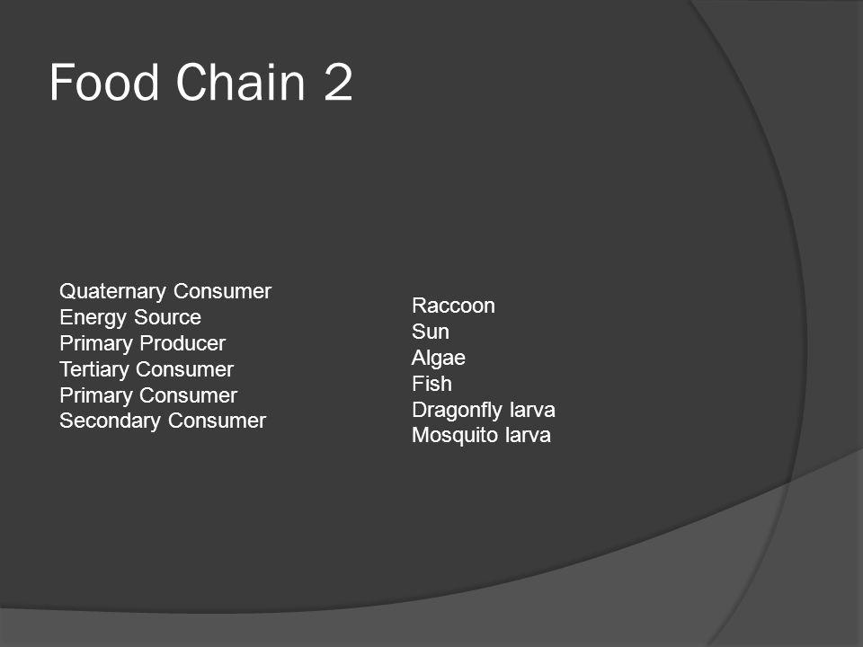 Food Chain 2 Quaternary Consumer Energy Source Primary Producer Tertiary Consumer Primary Consumer Secondary Consumer Raccoon Sun Algae Fish Dragonfly