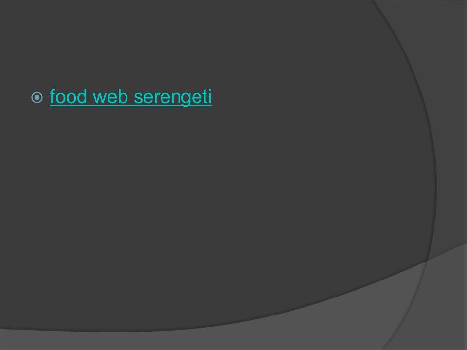 food web serengeti