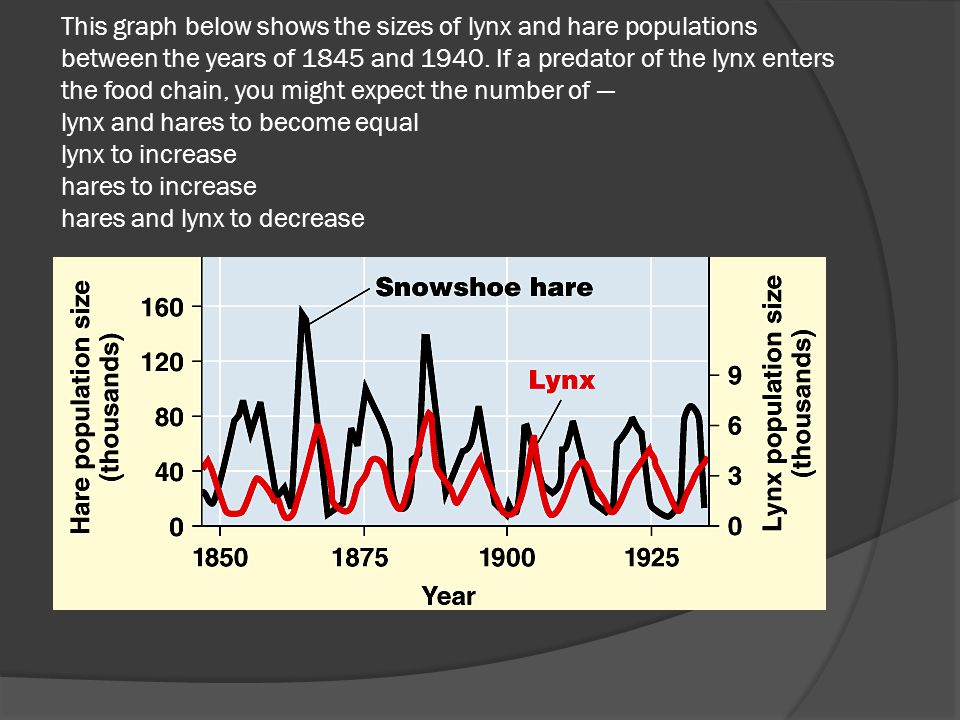 This graph below shows the sizes of lynx and hare populations between the years of 1845 and 1940. If a predator of the lynx enters the food chain, you