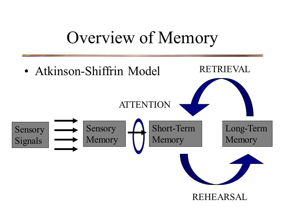 Overview of Memory Atkinson-Shiffrin Model Sensory Signals Sensory Memory Short-Term Memory Long-Term Memory ATTENTION REHEARSAL RETRIEVAL