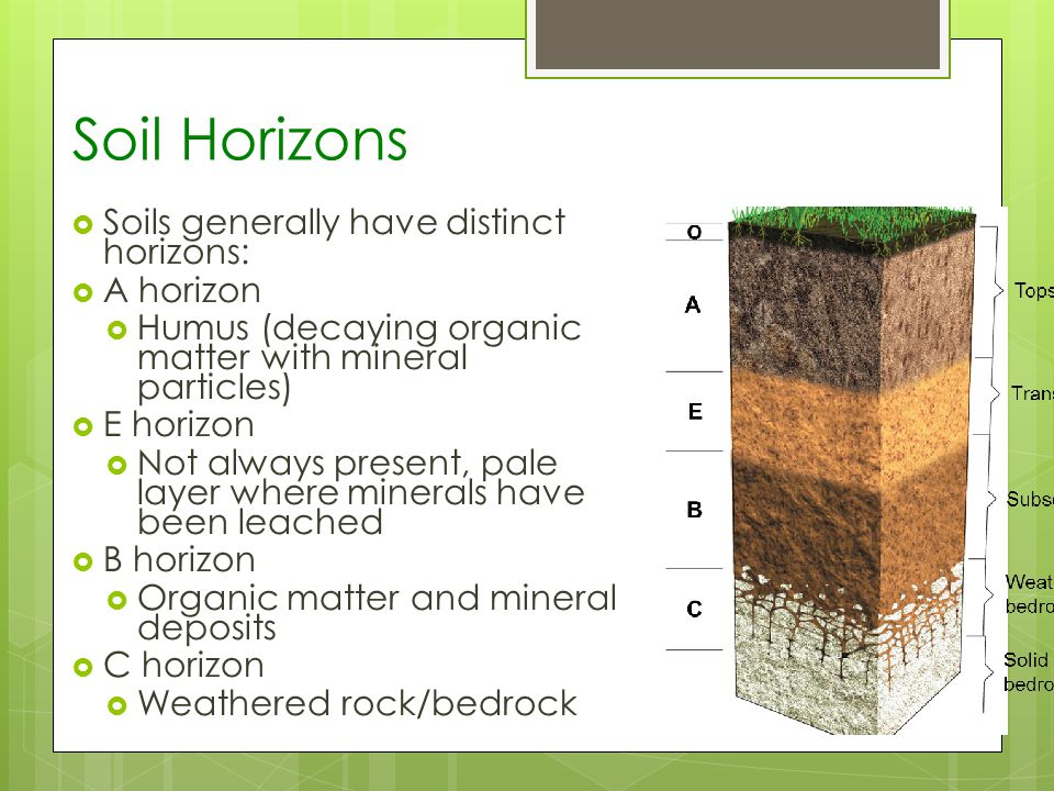Soil Horizons Soils generally have distinct horizons: A horizon Humus (decaying organic matter with mineral particles) E horizon Not always present, pale layer where minerals have been leached B horizon Organic matter and mineral deposits C horizon Weathered rock/bedrock