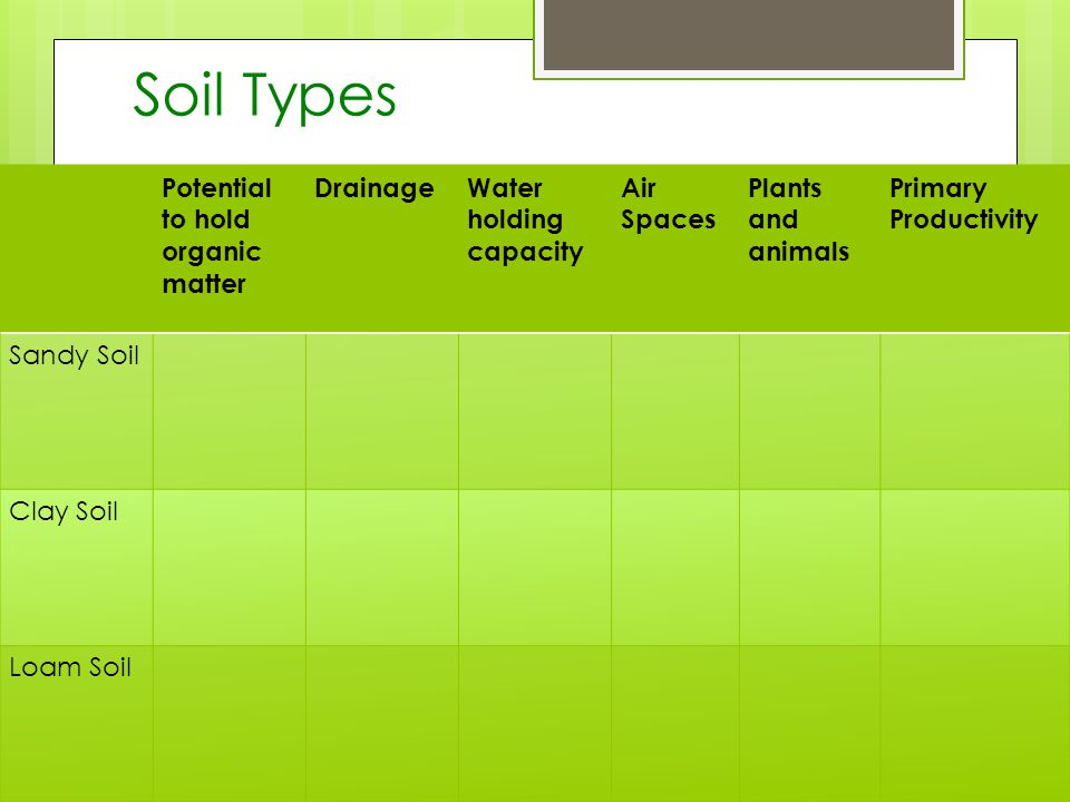 Soil Types Potential to hold organic matter DrainageWater holding capacity Air Spaces Plants and animals Primary Productivity Sandy Soil Clay Soil Loam Soil