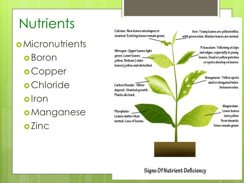 Nutrients Micronutrients Boron Copper Chloride Iron Manganese Zinc