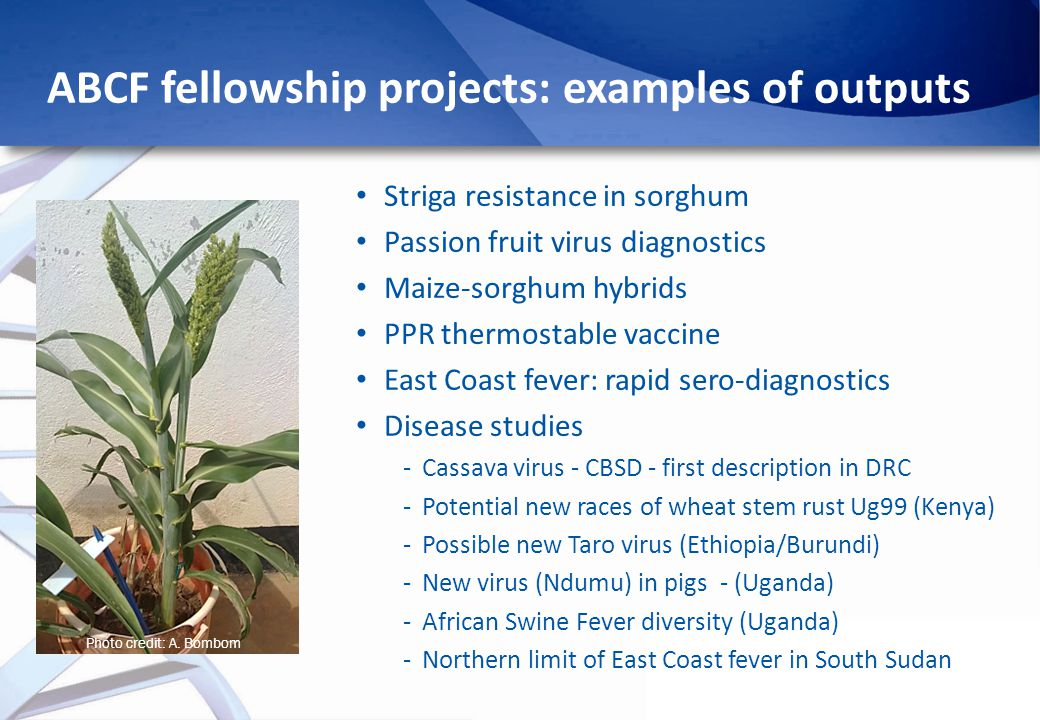 ABCF fellowship projects: examples of outputs Photo credit: A.