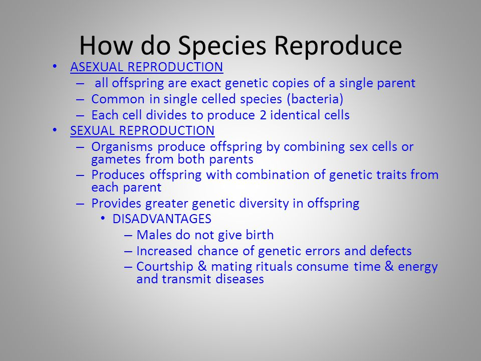 How do Species Reproduce ASEXUAL REPRODUCTION – all offspring are exact genetic copies of a single parent – Common in single celled species (bacteria)