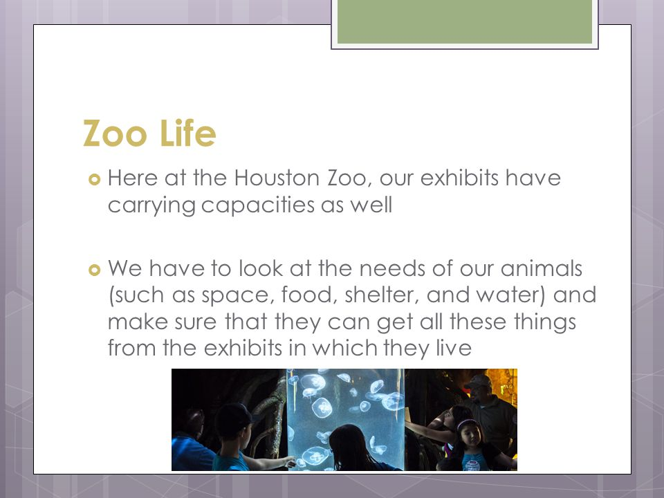 Zoo Life Here at the Houston Zoo, our exhibits have carrying capacities as well We have to look at the needs of our animals (such as space, food, shelter, and water) and make sure that they can get all these things from the exhibits in which they live