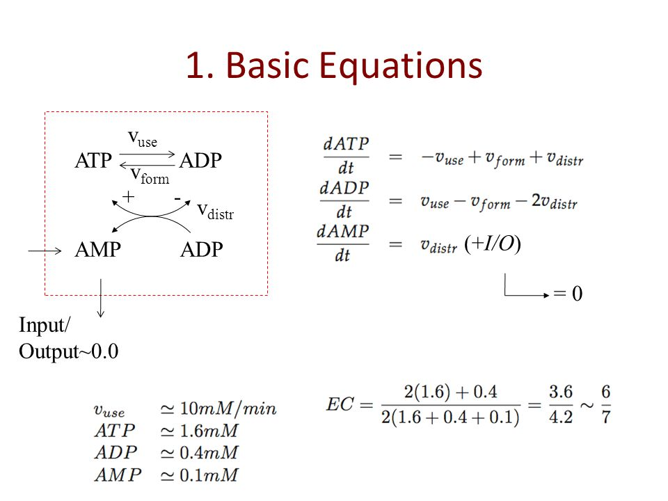 1. Basic Equations ATP ADP v form v use AMPADP v distr + - Input/ Output~0.0 = 0 (+I/O)