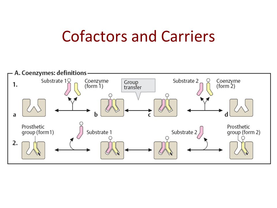 Cofactors and Carriers