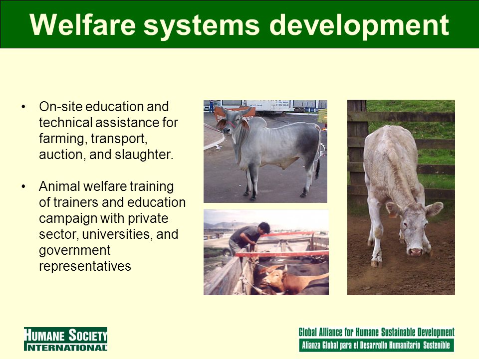 Welfare systems development On-site education and technical assistance for farming, transport, auction, and slaughter.