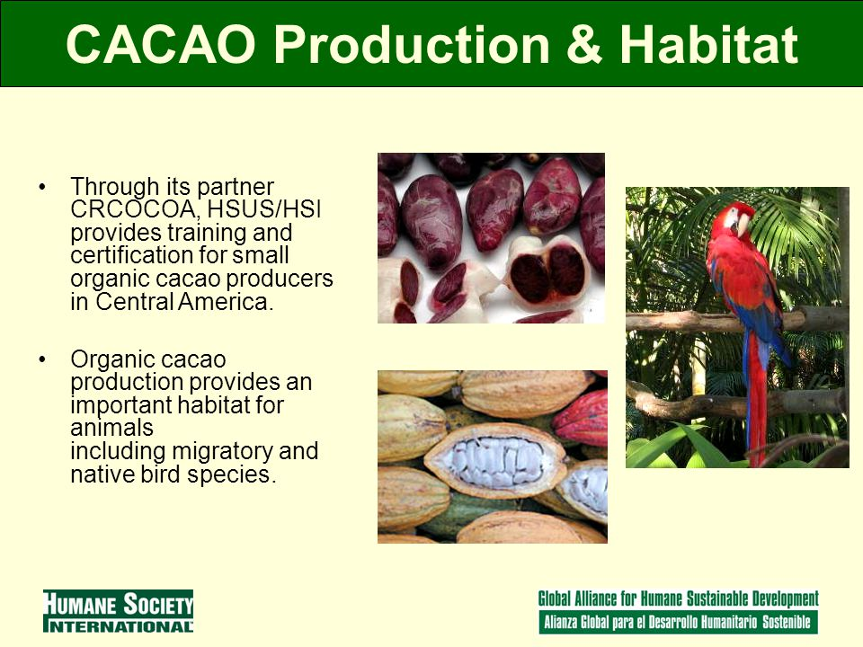 CACAO Production & Habitat Through its partner CRCOCOA, HSUS/HSI provides training and certification for small organic cacao producers in Central America.