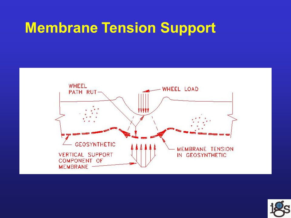 Membrane Tension Support