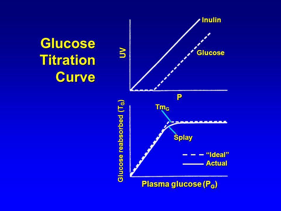 Inulin Glucose P UV Plasma glucose (P G ) Glucose reabsorbed (T G ) Tm G Splay IdealActual GlucoseTitrationCurve