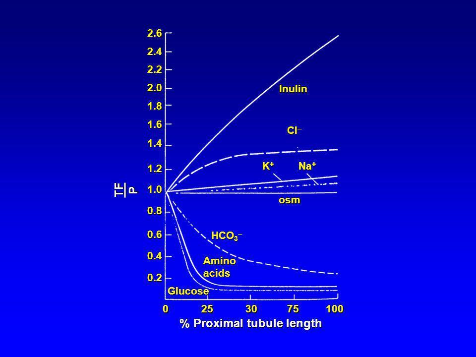 Inulin Cl Cl K+K+K+K+ Na + osm HCO 3 HCO 3 Aminoacids Glucose 2.62.42.22.01.81.61.41.21.00.80.60.40.2 0 25 30 75 100 % Proximal tubule length TFP