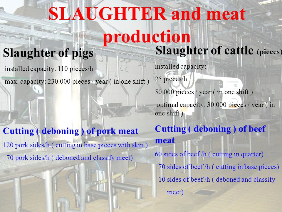 SLAUGHTER and meat production Slaughter of pigs installed capacity: 110 pieces/h max.
