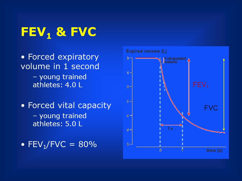 FEV 1 & FVC Forced expiratory volume in 1 second – young trained athletes: 4.0 L Forced vital capacity – young trained athletes: 5.0 L FEV 1 /FVC = 80
